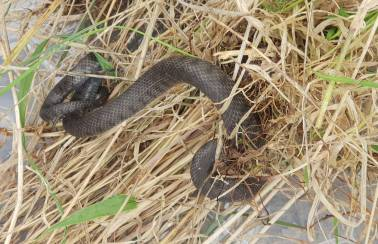 Snakes Alive! Reptile relocation another big win for Aggregate Industries