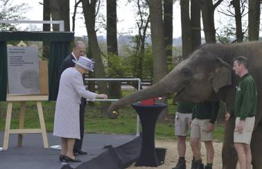 Jumbo joy as Garside Sands helps to create comfy new home for elephant herd at ZSL Whipsnade Zoo